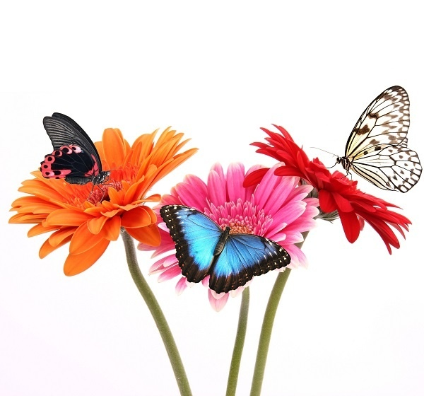 http://labell.ir/images/butterfly/butterfly-069.jpg