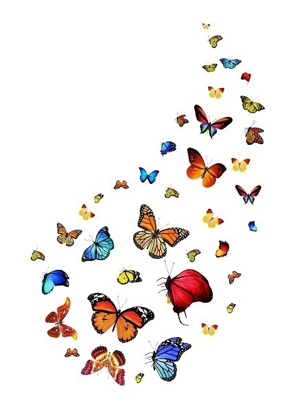 http://labell.ir/images/butterfly/butterfly-070.jpg