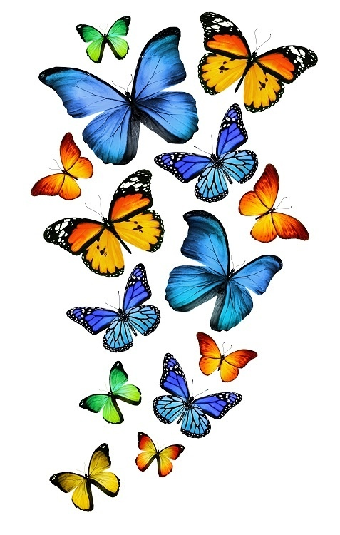 http://labell.ir/images/butterfly/butterfly-071.jpg
