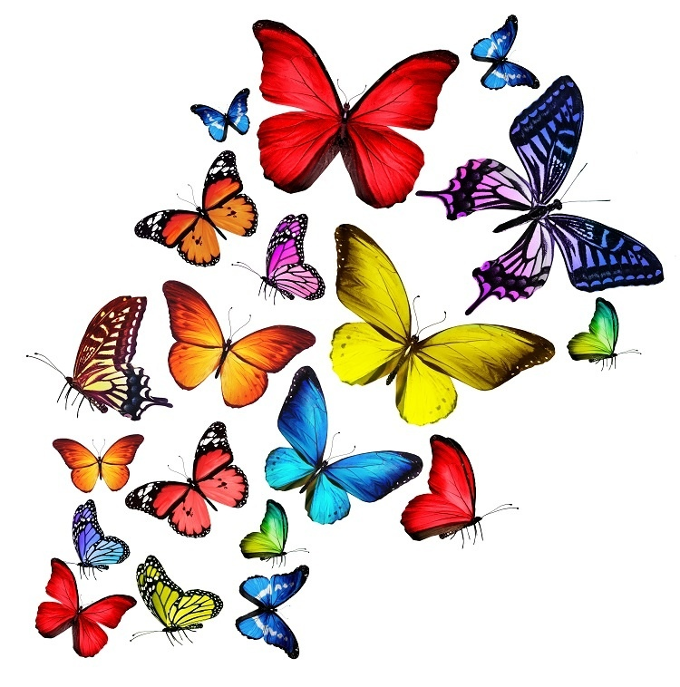 http://labell.ir/images/butterfly/butterfly-072.jpg