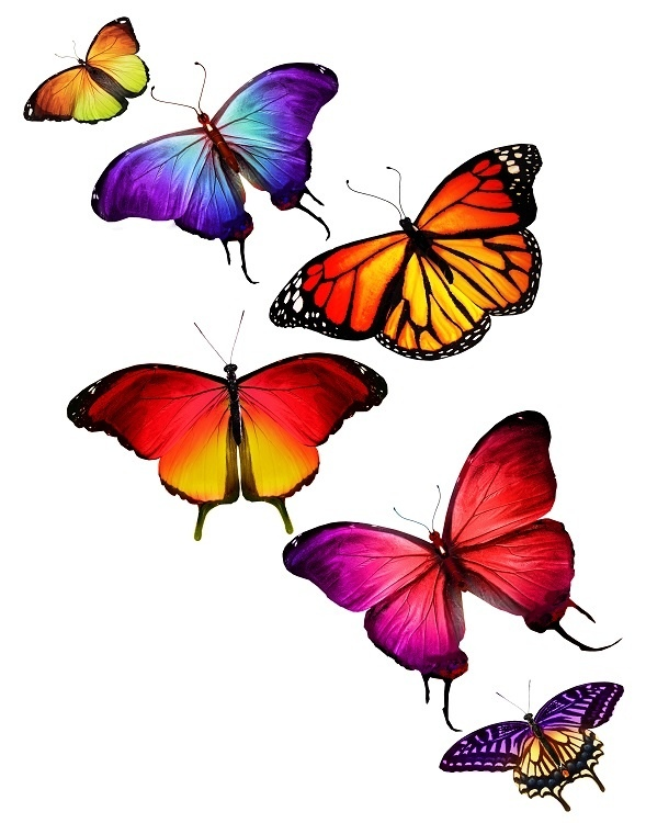 http://labell.ir/images/butterfly/butterfly-073.jpg