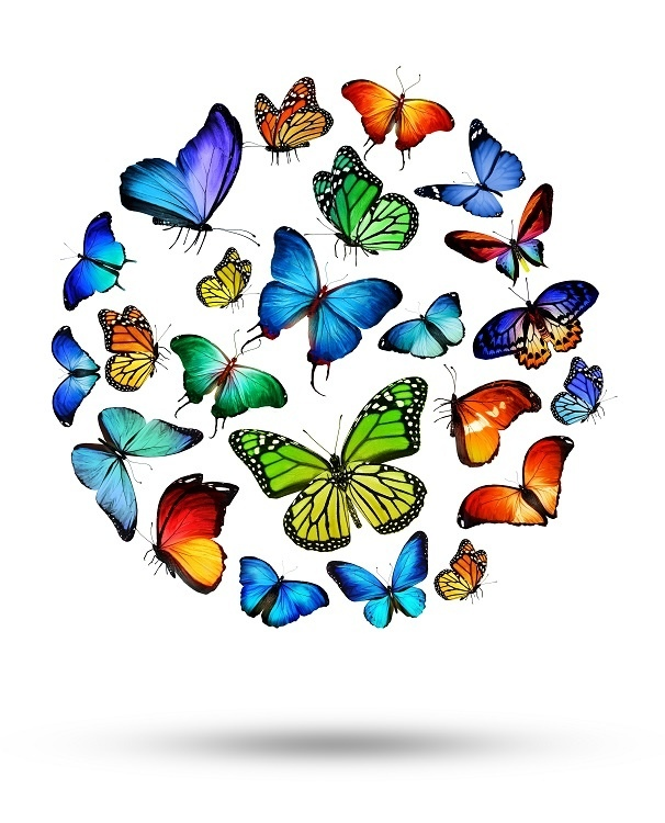 http://labell.ir/images/butterfly/butterfly-075.jpg