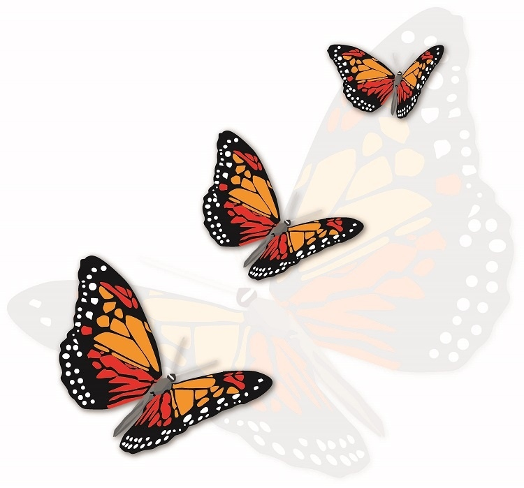 http://labell.ir/images/butterfly/butterfly-077.jpg