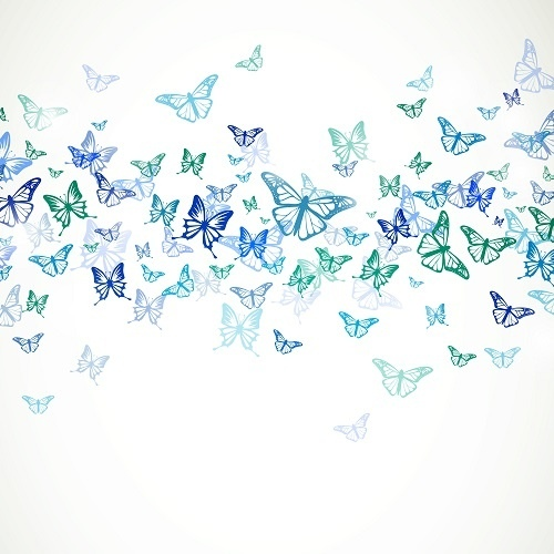 http://labell.ir/images/butterfly/butterfly-079.jpg