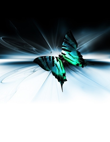 http://labell.ir/images/butterfly/butterfly-088.jpg