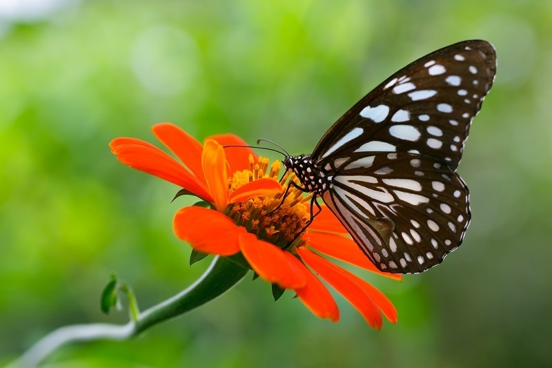 http://labell.ir/images/butterfly/butterfly-096.jpg