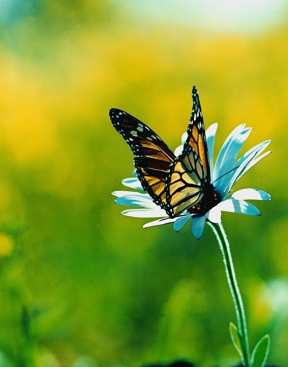 http://labell.ir/images/butterfly/butterfly-100.jpg
