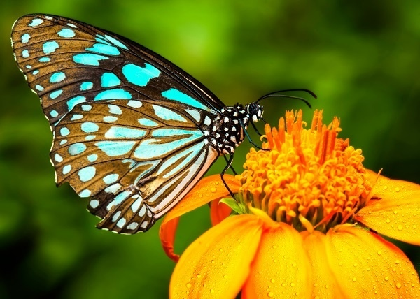 http://labell.ir/images/butterfly/butterfly-101.jpg