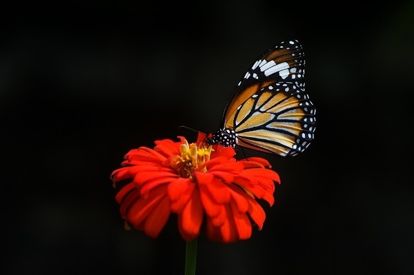 http://labell.ir/images/butterfly/butterfly-102.jpg