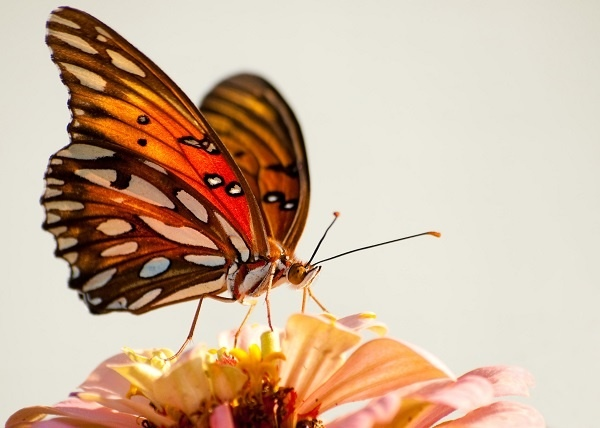http://labell.ir/images/butterfly/butterfly-103.jpg