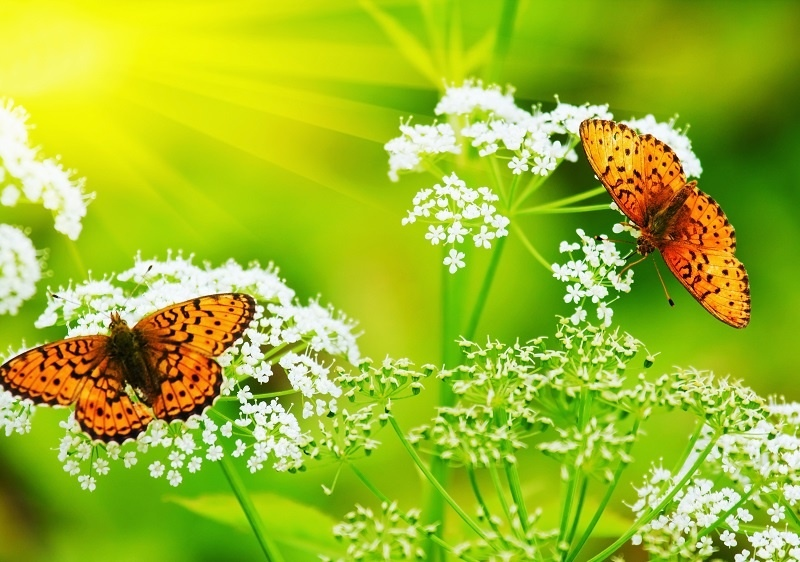 http://labell.ir/images/butterfly/butterfly-105.jpg