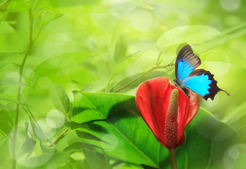 http://labell.ir/images/butterfly/butterfly-108.jpg