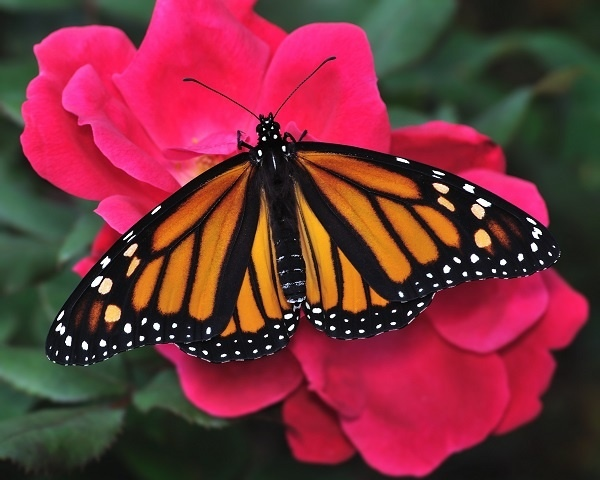 http://labell.ir/images/butterfly/butterfly-109.jpg