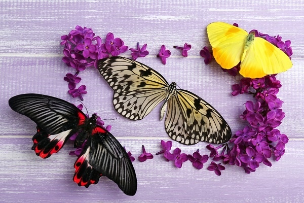 http://labell.ir/images/butterfly/butterfly-111.jpg