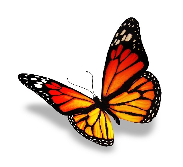http://labell.ir/images/butterfly/butterfly-113.jpg