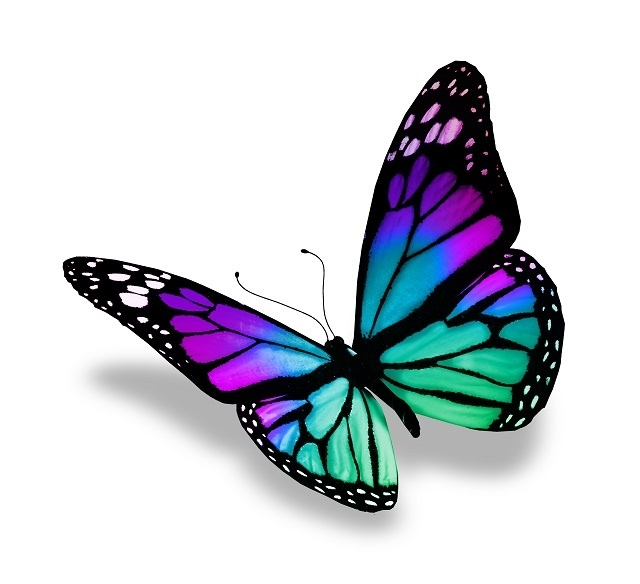 http://labell.ir/images/butterfly/butterfly-114.jpg