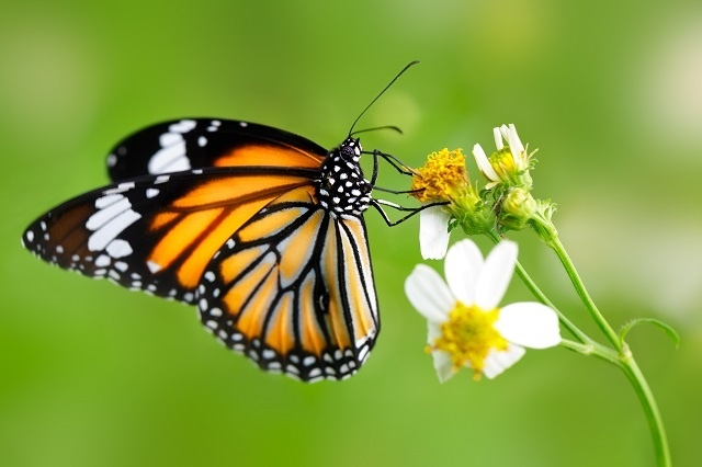 http://labell.ir/images/butterfly/butterfly-118.jpg