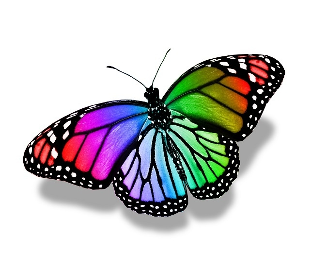 http://labell.ir/images/butterfly/butterfly-119.jpg