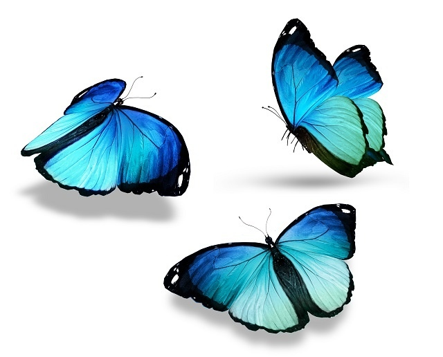 http://labell.ir/images/butterfly/butterfly-129.jpg