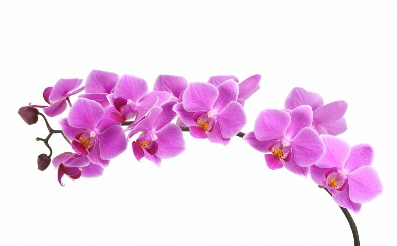 http://labell.ir/images/flowers/flowers-001.jpg