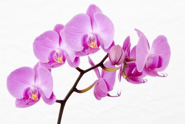 http://labell.ir/images/flowers/flowers-002.jpg
