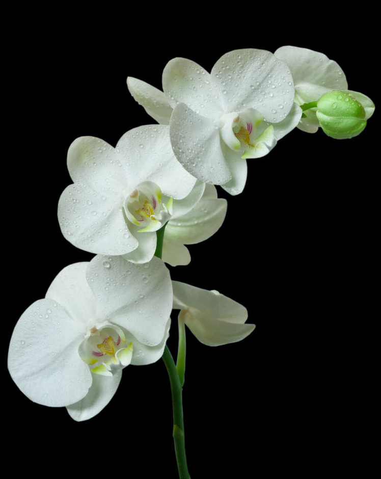 http://labell.ir/images/flowers/flowers-004.jpg