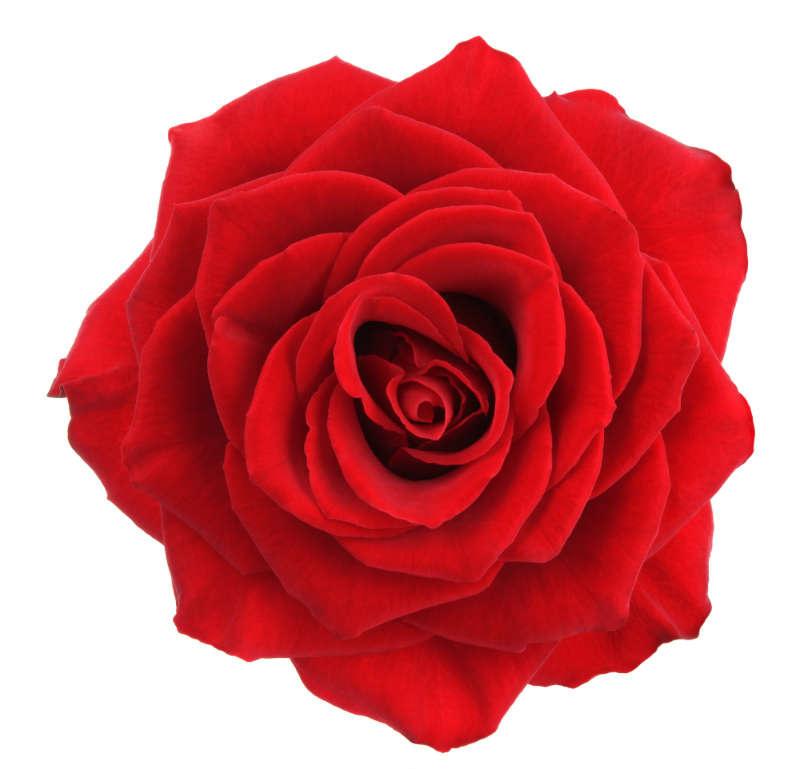 http://labell.ir/images/flowers/flowers-010.jpg