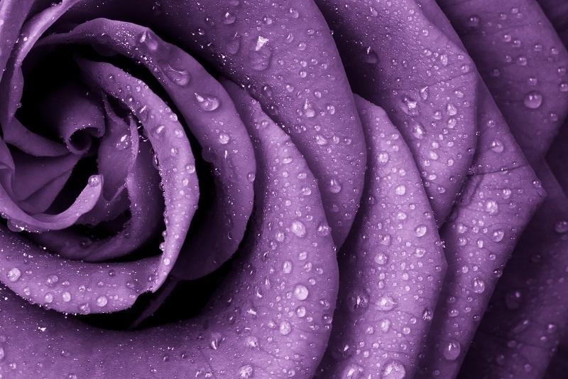 http://labell.ir/images/flowers/flowers-012.jpg