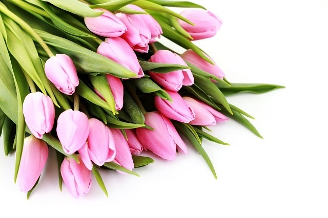 http://labell.ir/images/flowers/flowers-014.jpg