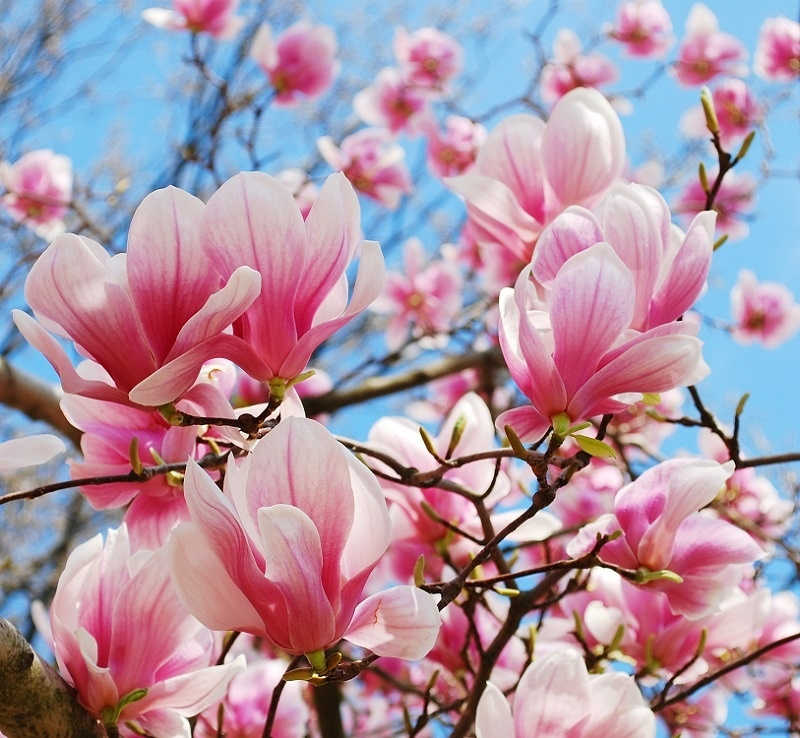 http://labell.ir/images/flowers/flowers-015.jpg