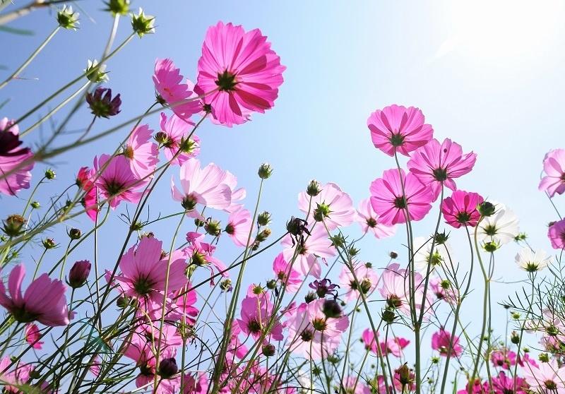 http://labell.ir/images/flowers/flowers-018.jpg