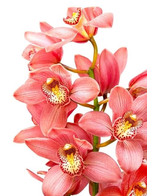 http://labell.ir/images/flowers/flowers-020.jpg