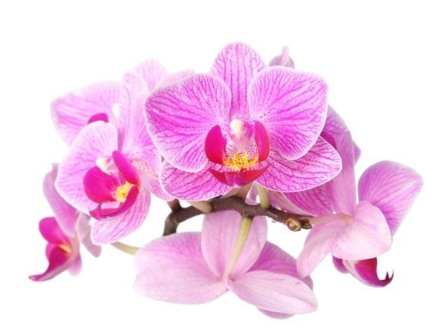 http://labell.ir/images/flowers/flowers-021.jpg
