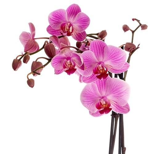 http://labell.ir/images/flowers/flowers-022.jpg