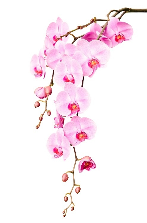 http://labell.ir/images/flowers/flowers-024.jpg