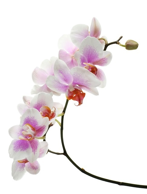 http://labell.ir/images/flowers/flowers-025.jpg