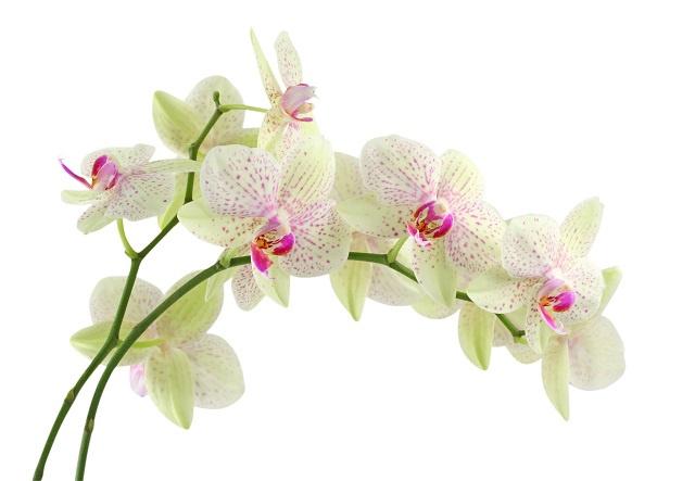 http://labell.ir/images/flowers/flowers-026.jpg