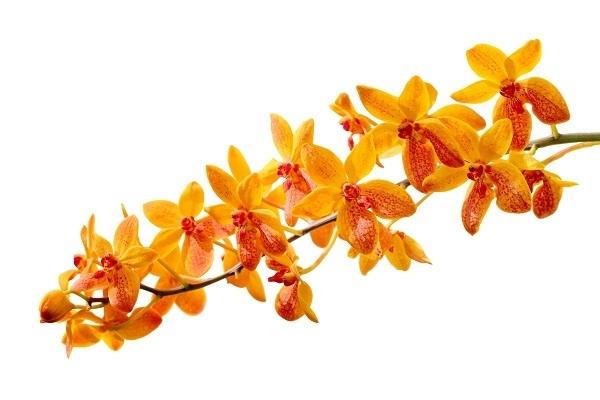 http://labell.ir/images/flowers/flowers-027.jpg
