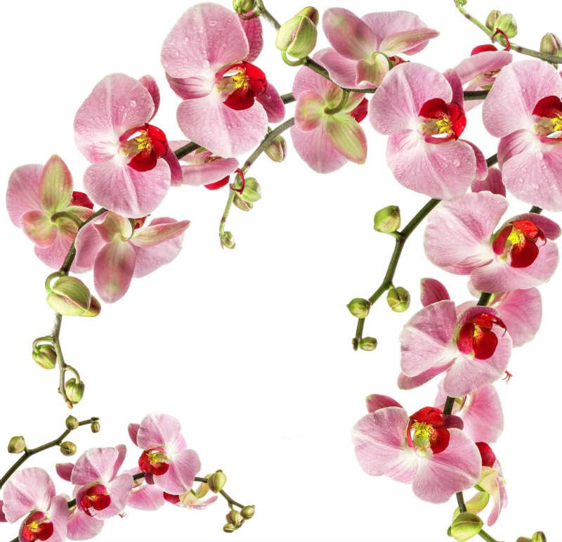 http://labell.ir/images/flowers/flowers-028.jpg