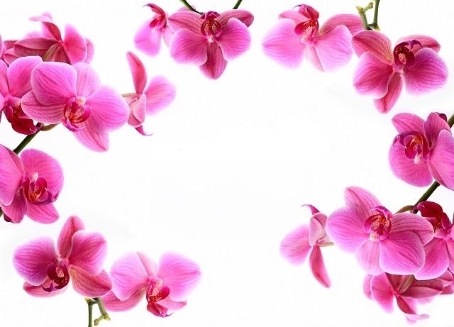 http://labell.ir/images/flowers/flowers-029.jpg