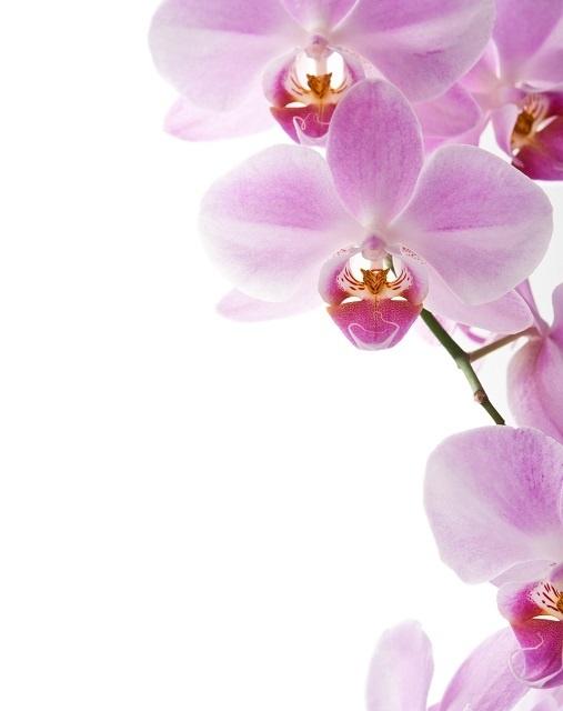 http://labell.ir/images/flowers/flowers-030.jpg