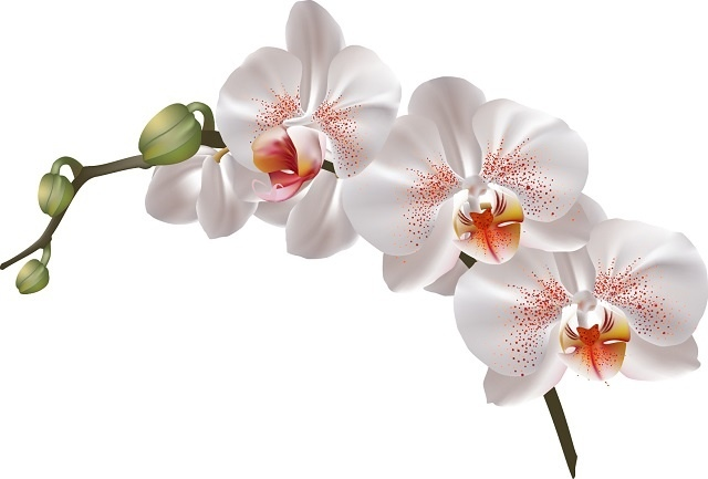 http://labell.ir/images/flowers/flowers-031.jpg