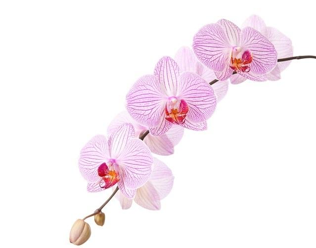 http://labell.ir/images/flowers/flowers-032.jpg