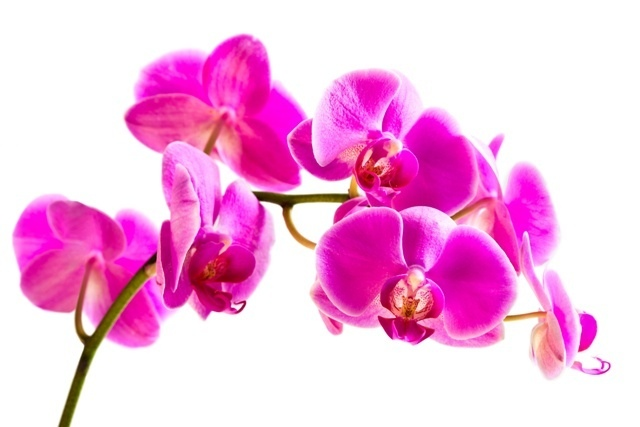 http://labell.ir/images/flowers/flowers-033.jpg