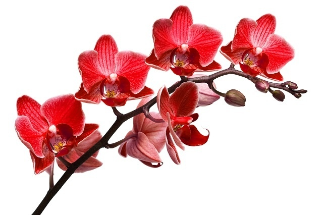 http://labell.ir/images/flowers/flowers-034.jpg