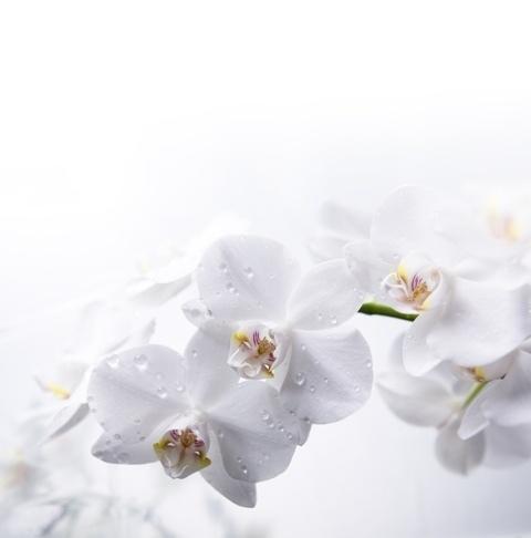 http://labell.ir/images/flowers/flowers-036.jpg