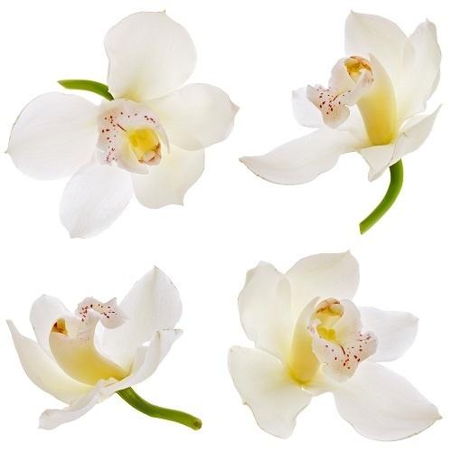 http://labell.ir/images/flowers/flowers-037.jpg