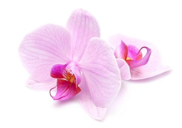 http://labell.ir/images/flowers/flowers-039.jpg