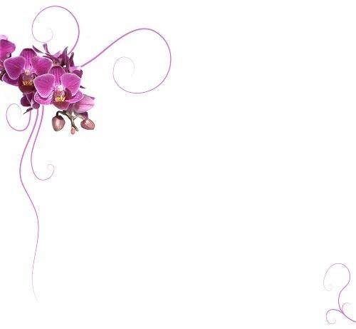 http://labell.ir/images/flowers/flowers-040.jpg