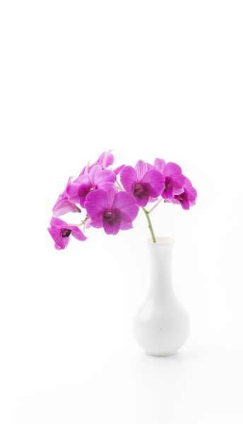 http://labell.ir/images/flowers/flowers-041.jpg